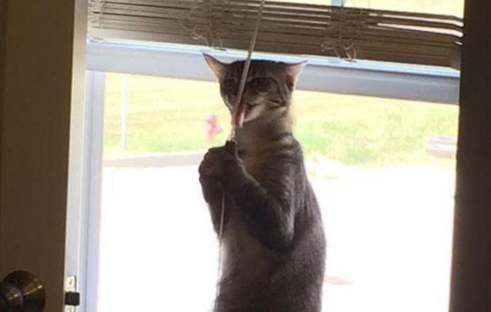 Mmmm I Like Strings - Cat humor