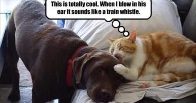 This Is Totally Cool - Cat humor