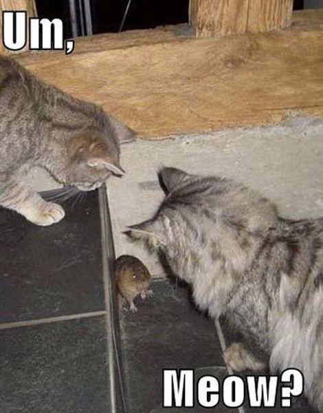 UM, Meow? - Cat humor