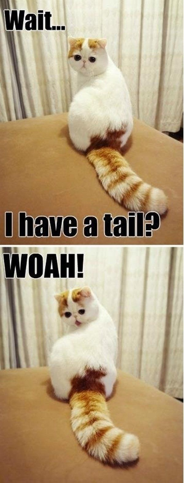 Wait - Cat humor