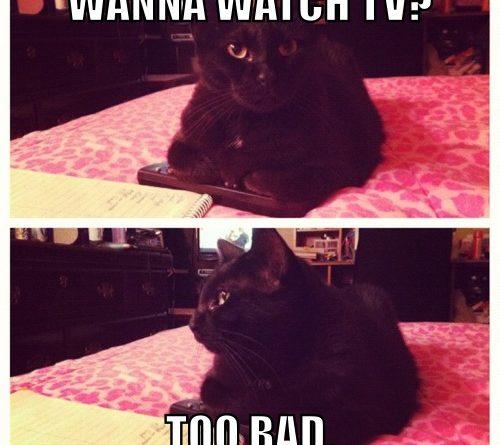 Wanna Watch TV? - Cat humor