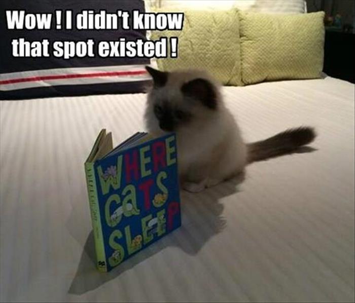Where Cats Sleep - Cat humor