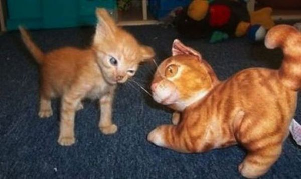 A Wise Guy, Ha? - Cat humor