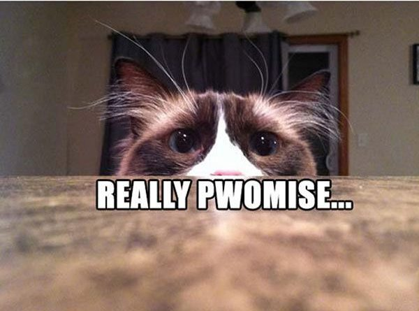 You Pwomise? - Cat humor