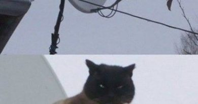 You Will Watch What I Tell You - Cat humor
