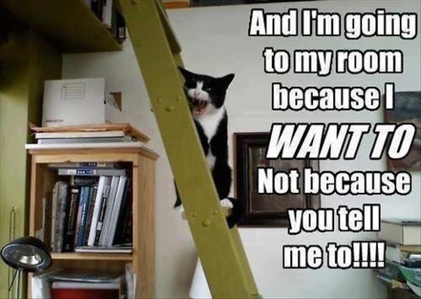 Angry Cat - Cat humor