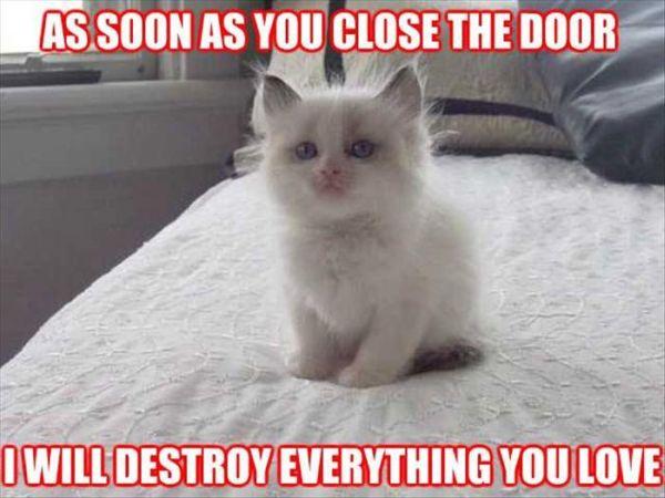 As Soon As You Close The Door - Cat humor