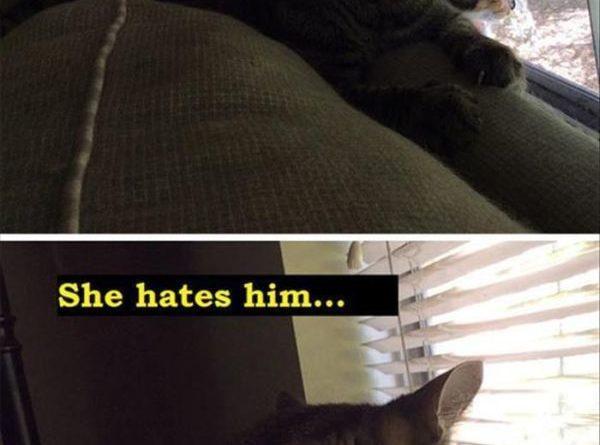 A Complex relationship - Cat humor