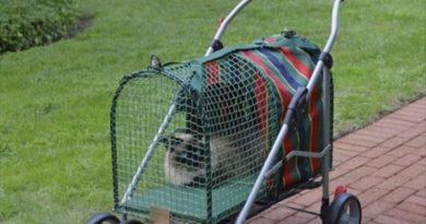 Crazy Cat Lady Stroller - Cat humor