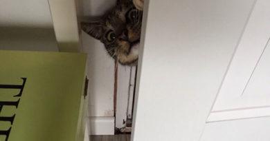 Where's The Baby? - Cat humor