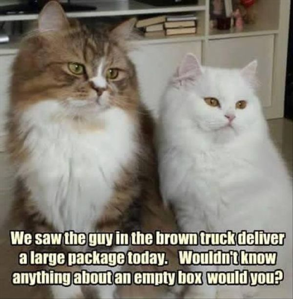 Curious Cats - Cat humor
