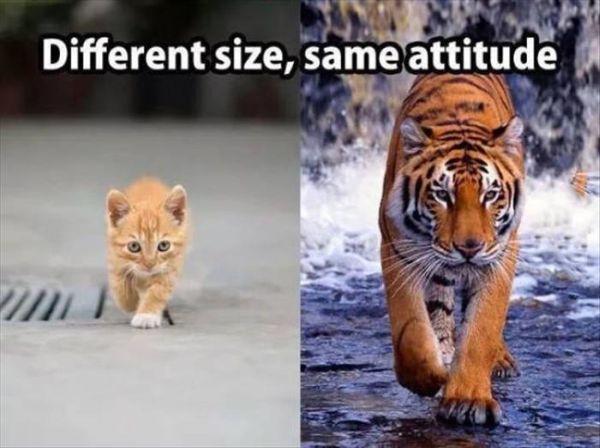 Different Size, Same Attitude - Cat humor