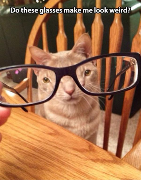Do I Look Weird? - Cat humor