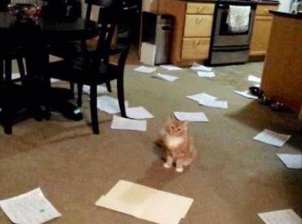 Short Story Or Long Version? - Cat humor
