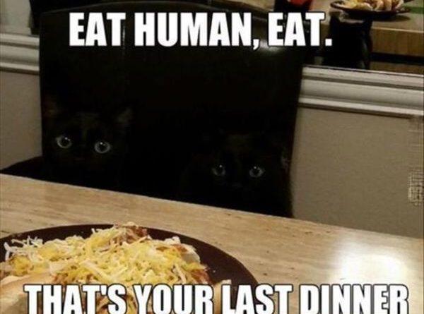 Eat Human - Cat humor