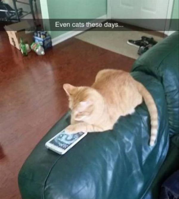Even Cats These Days... - Cat humor