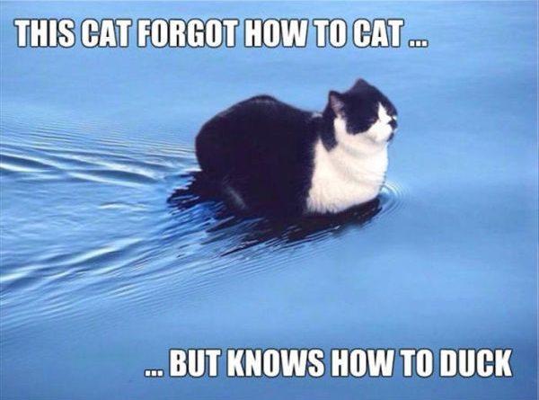 This Cat Forgot How To Cat... - Cat humor