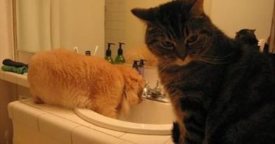 Chamber Of Secrets - Cat humor