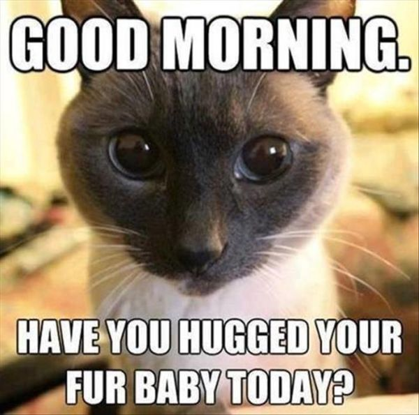 Good Morning – Cat Humor