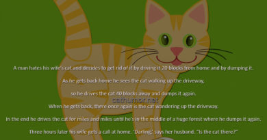 GPS Cat - Cat humor