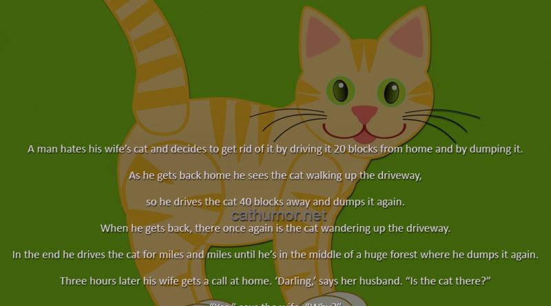 GPS Cat - Cat humor