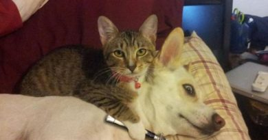 Hand Over The Catnip… - Cat humor