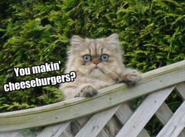 Hello Neighbor - Cat humor