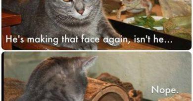 He's Making That Face Again - Cat humor