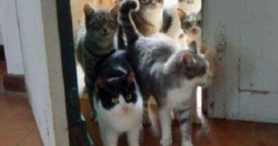 We Understand You Are 40 - Cat humor