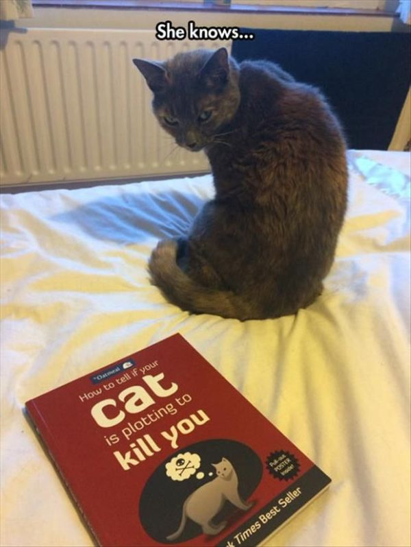 She Knows - Cat humor