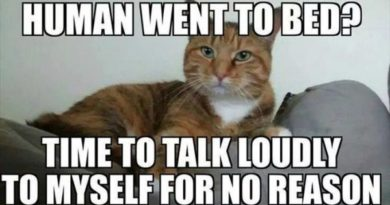 Human Went To Bed? - Cat humor