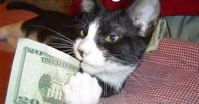 I Broke Your Dog - Cat humor