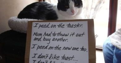 I Don't Like Toast - Cat humor