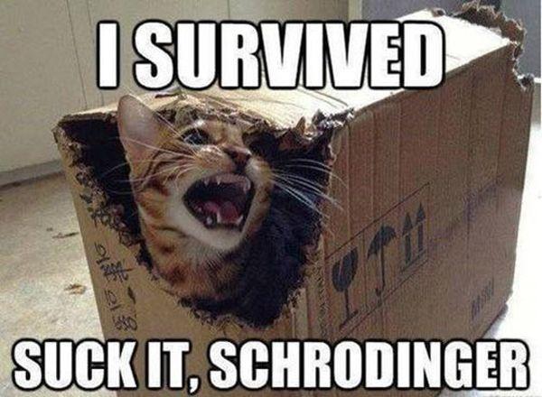 I Survived - Cat humor