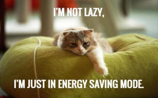 I'm Not Lazy... - Cat humor