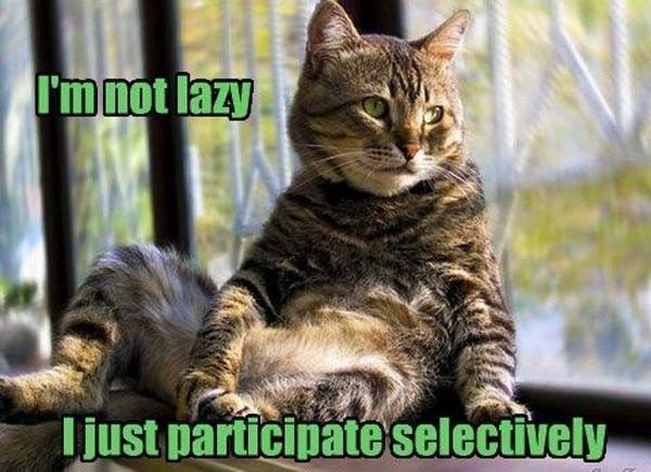I'm Not Lazy - Cat humor