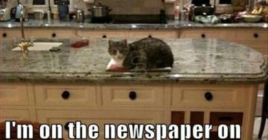 I'm Not On The Counter - Cat humor