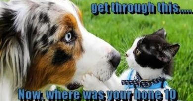 It's Alright Champ... - Cat humor