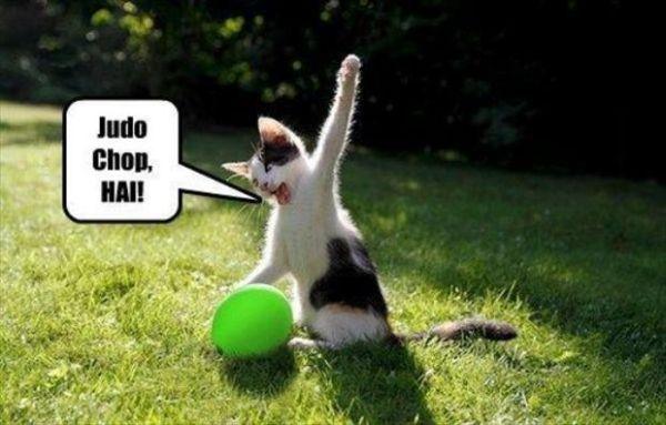Judo Chop - Cat humor
