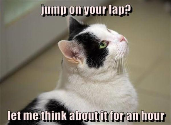 Jump On Your Lap? - Cat humor