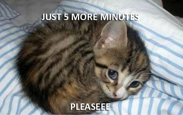 Just 5 More Minutes - Cat humor