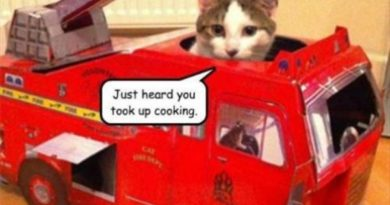 Just Heard You Took Up Cooking - Cat humor