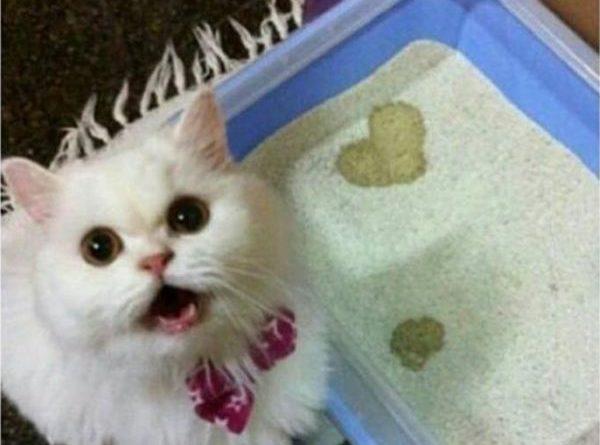 Kitty Love - Cat humor