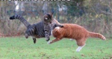 Kung Fu Skills - Cat humor