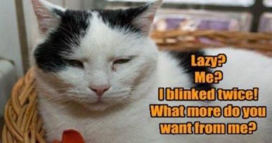Lazy? Me? - Cat humor