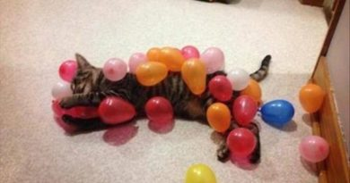 Balloon Pop Festival - Cat humor