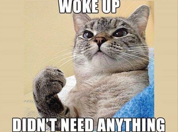Meowed Until Human Woke Up - Cat humor