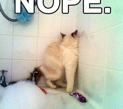 Nope! - Cat humor