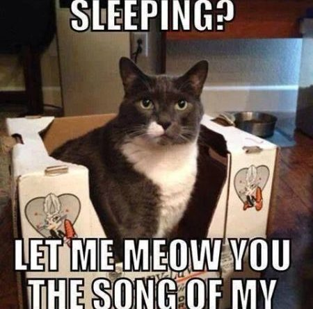 Oh You're Sleeping? - Cat humor