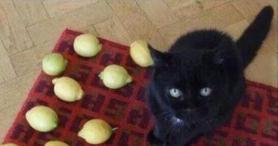 Sad Cat - Cat humor
